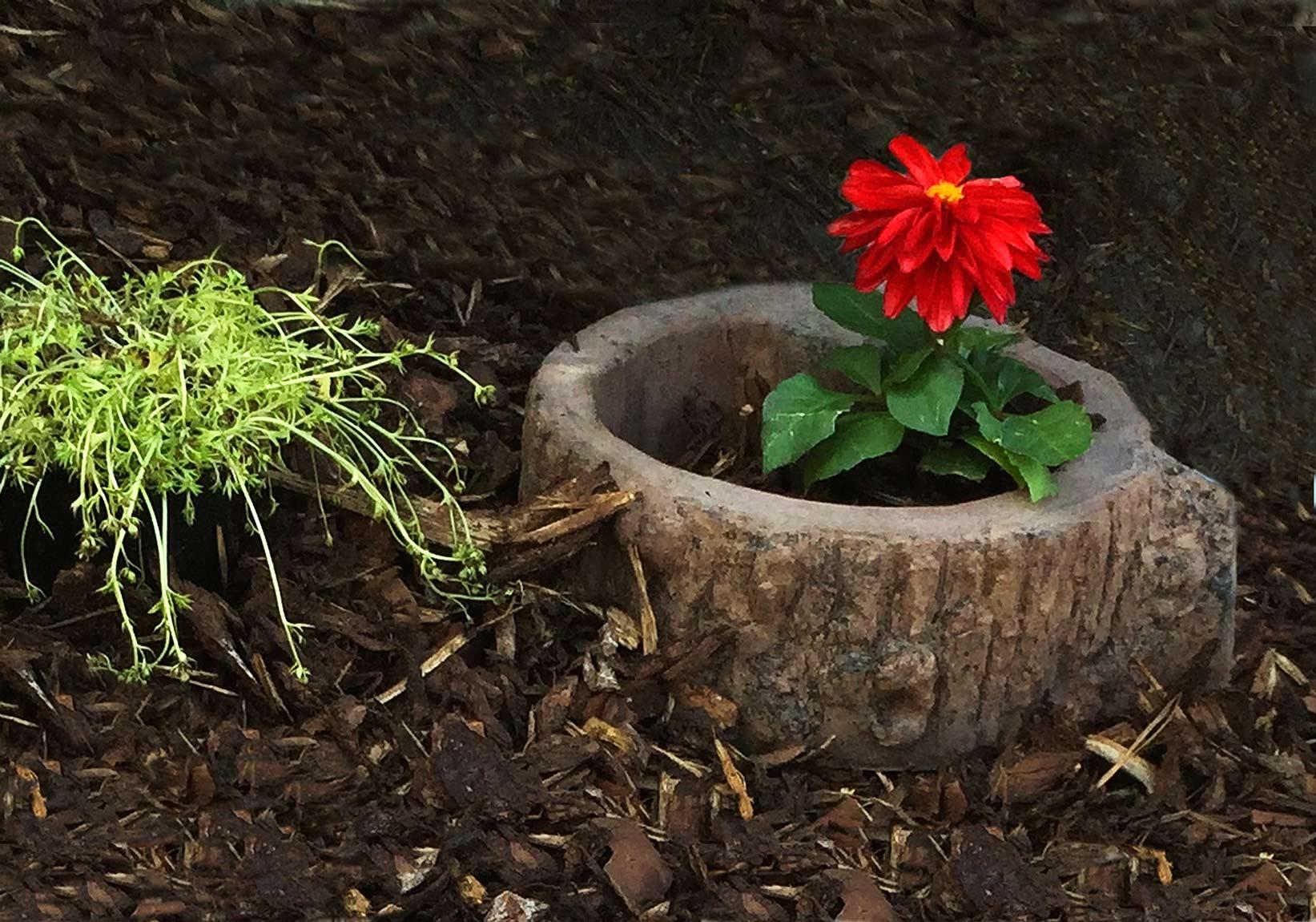 Dřevěný program - Květináč